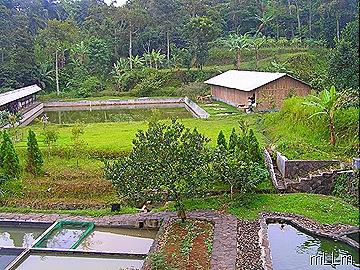 kolam, kandang dombrut, kandang ayam kampung