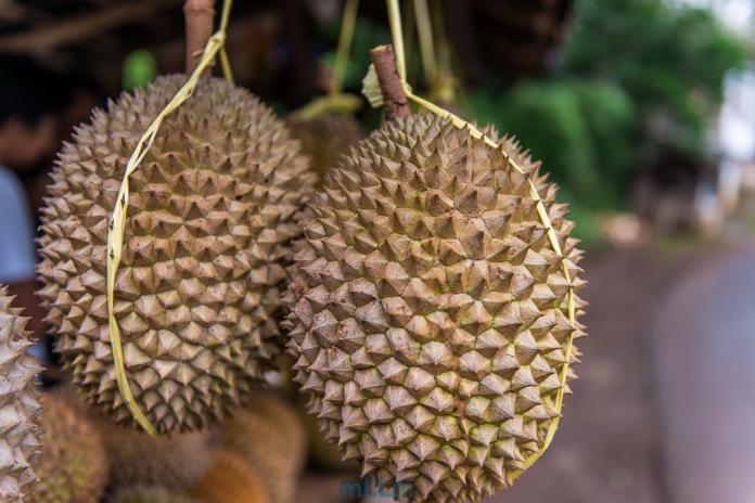 Durian Brongkol