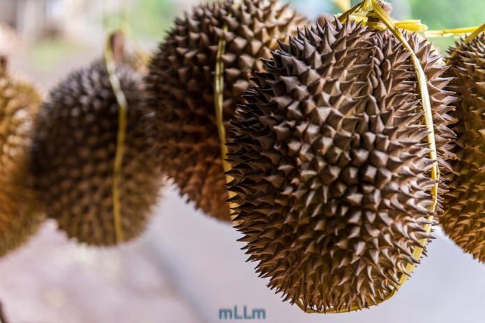 Durian Brongkol siap saji