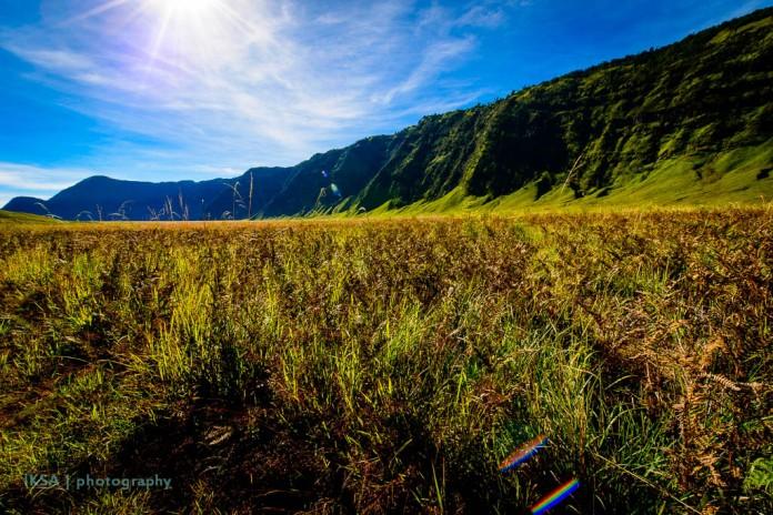 Rumput dan Tebing